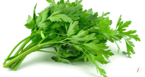 Jenis Tanaman Herbal yang Berkhasiat
